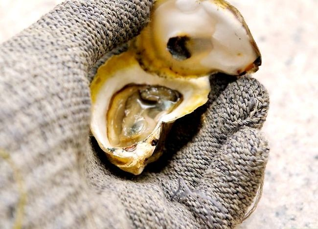 Titel afbeelding Shuck Oysters Step 9