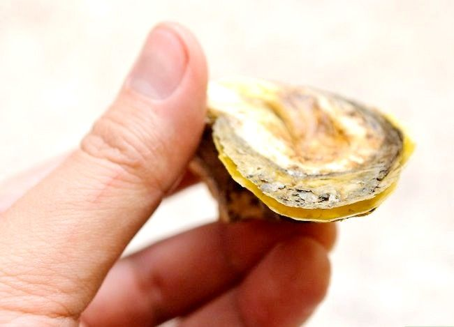 Titel afbeelding Shuck Oysters Step 3Bullet2