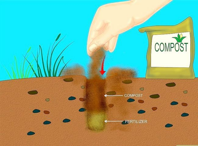 Titel afbeelding Add Compost to Plants Step 9