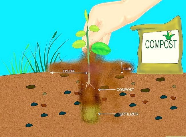 Titel afbeelding Add Compost to Plants Step 10