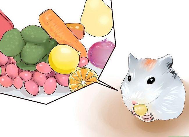 Titel afbeelding Feed Hamsters Step 2