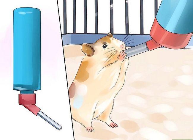 Titel afbeelding Feed Hamsters Step 5