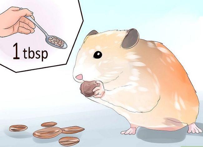 Titel afbeelding Feed Hamsters Step 8