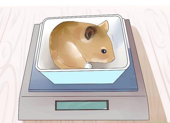 Titel afbeelding Feed Hamsters Step 10