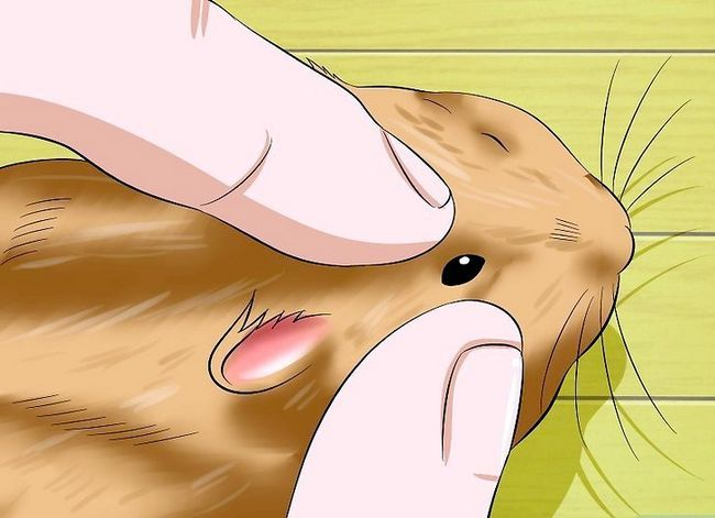 Titel afbeelding Help a Hamster With Sticky Eye Step 8