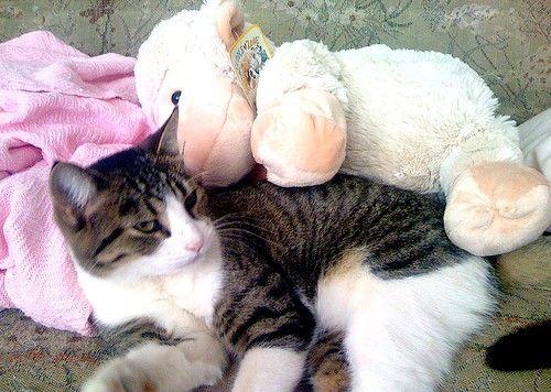 Titel afbeelding Cat_and_animal_85