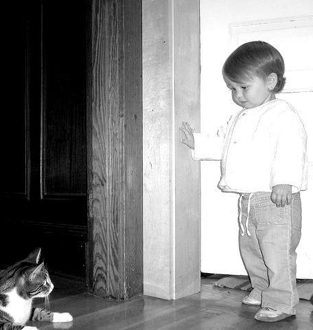 Titel afbeelding Cat_baby_meets_147