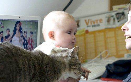 Titel afbeelding Baby_meets_cat_553