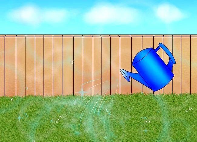 Titel afbeelding Lay a Turf Lawn Step 6