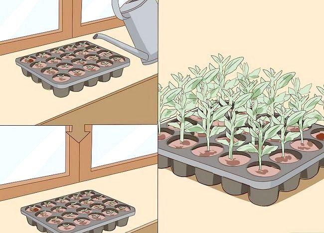 Titel afbeelding Start Seeds Indoors Step 25