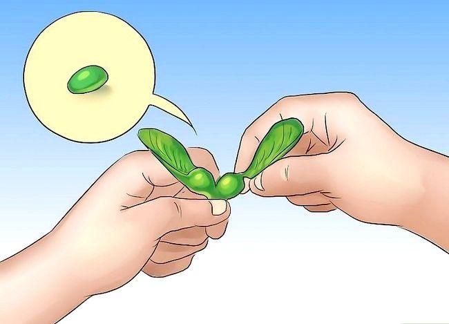 Titel afbeelding Eat Maple Seeds Step 2