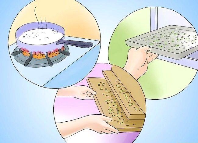 Titel afbeelding Eat Maple Seeds Step 4