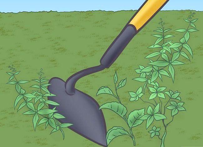 Titel afbeelding Control Lawn Weeds Step 11