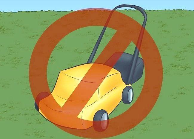Titel afbeelding Control Lawn Weeds Step 7