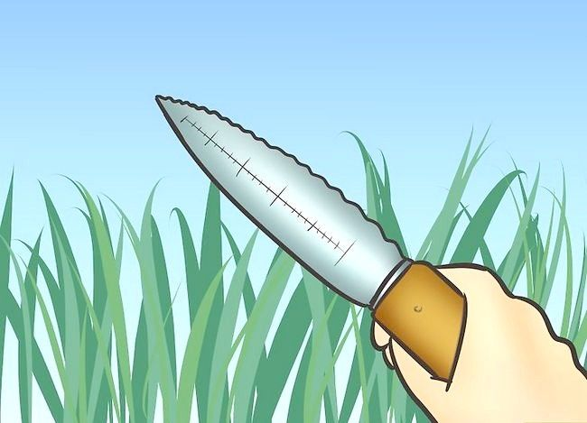 Titel afbeelding Control Lawn Weeds Step 10