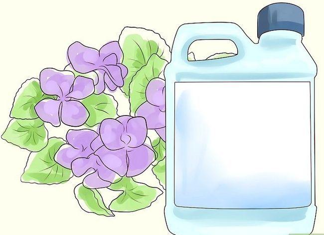 Titel afbeelding Control Wild Violets Step 1