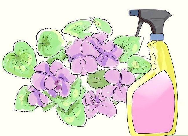 Titel afbeelding Control Wild Violets Step 2