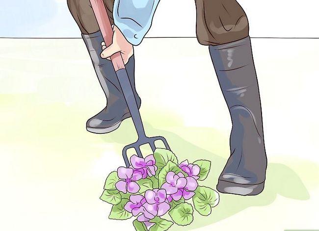 Titel afbeelding Control Wild Violets Step 6