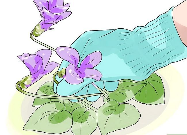 Titel afbeelding Control Wild Violets Step 7