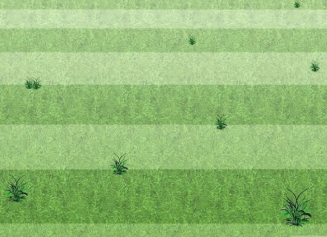 Titel afbeelding Mow a Lawn Step 8