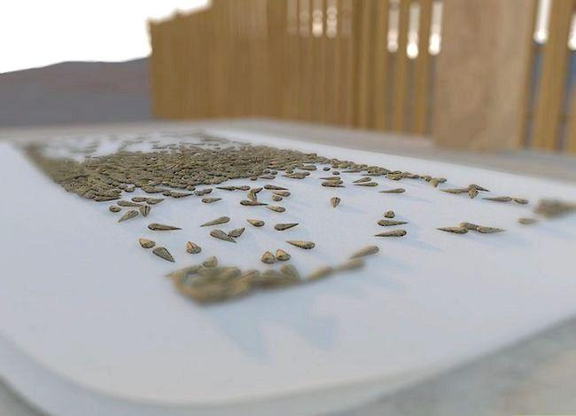 Titel afbeelding Harvest Sunflower Seeds Step 14
