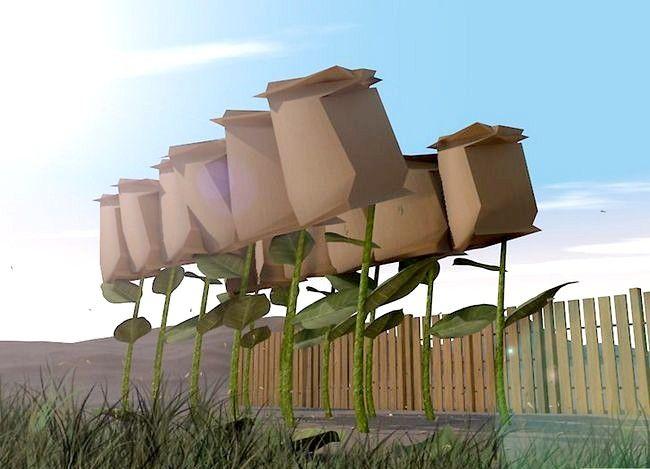 Titel afbeelding Harvest Sunflower Seeds Step 2
