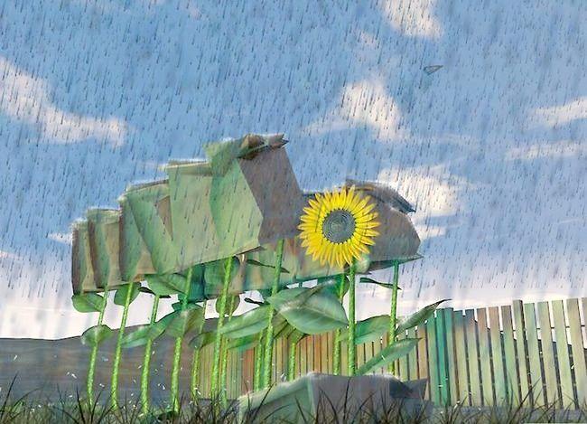 Titel afbeelding Harvest Sunflower Seeds Step 3