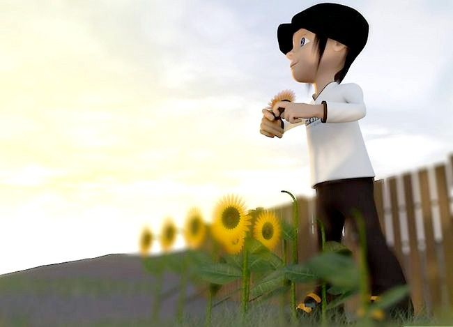 Titel afbeelding Harvest Sunflower Seeds Step 4