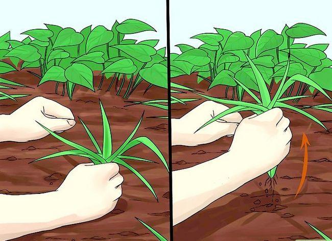 Titel afbeelding Create Tree Flower Beds Step 16