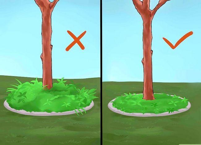 Titel afbeelding Create Tree Flower Beds Step 6