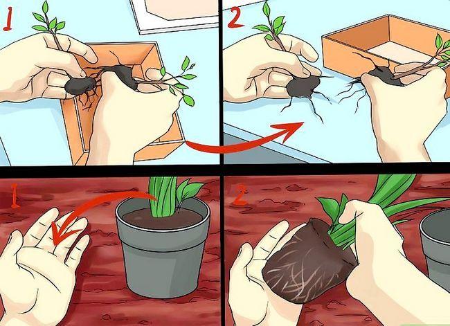 Titel afbeelding Create Tree Flower Beds Step 13
