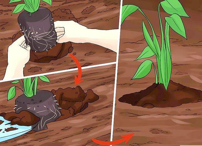 Titel afbeelding Create Tree Flower Beds Step 15