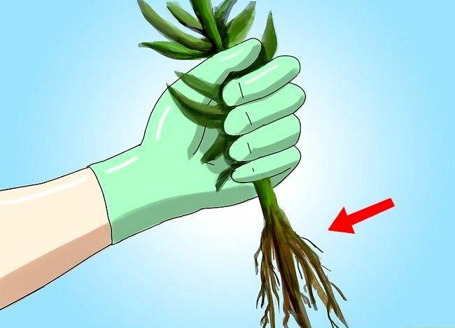 Titel afbeelding Create a Weed Free Lawn Zonder schadelijke chemicaliën te gebruiken Stap 4
