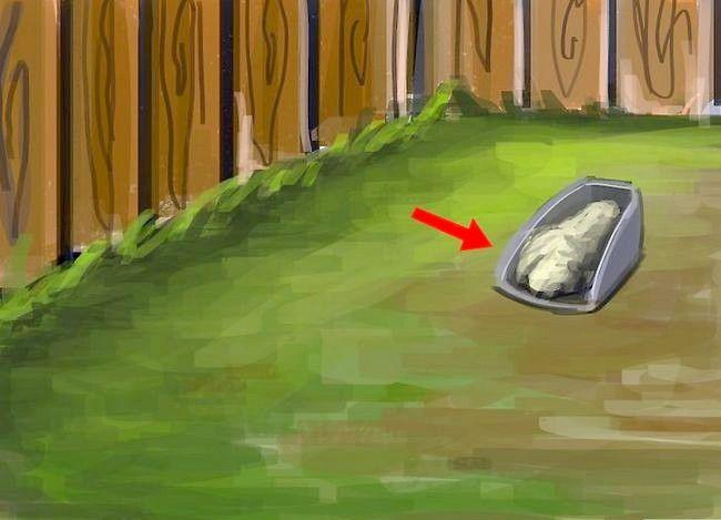 Titel afbeelding Create a Weed Free Lawn Zonder schadelijke chemicaliën te gebruiken Stap 5