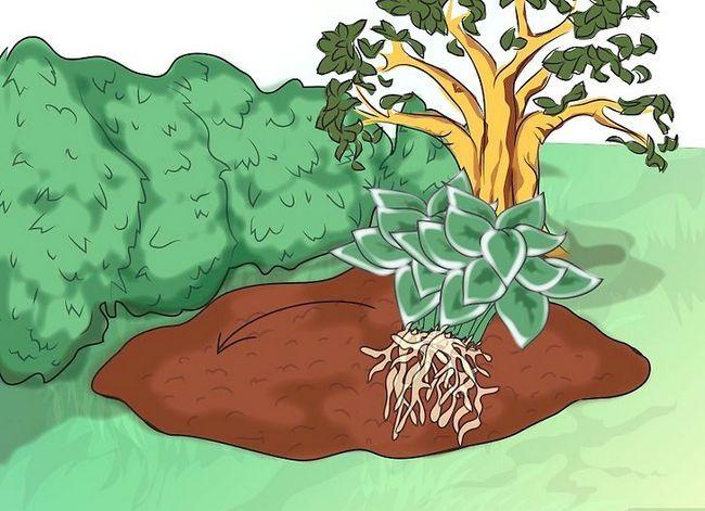 Titel afbeelding Make a Bog Garden Step 6Bullet1