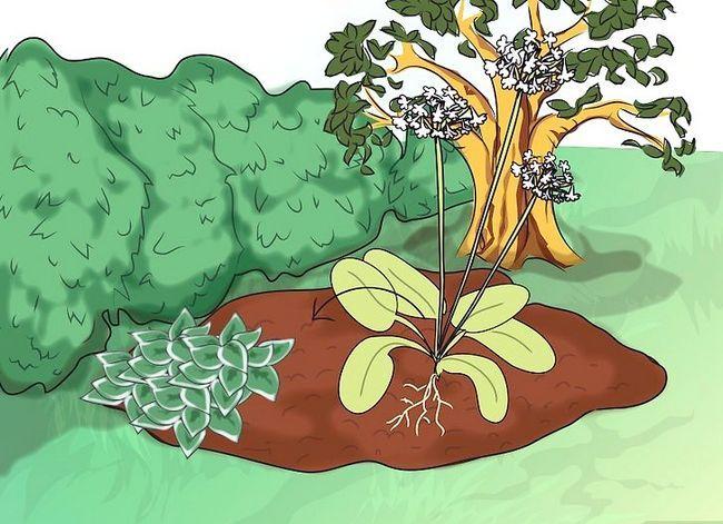 Titel afbeelding Make a Bog Garden Step 6Bullet2