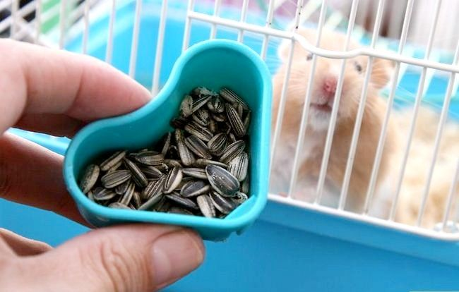 Titel afbeelding Create a Bond With Your Hamster Step 4