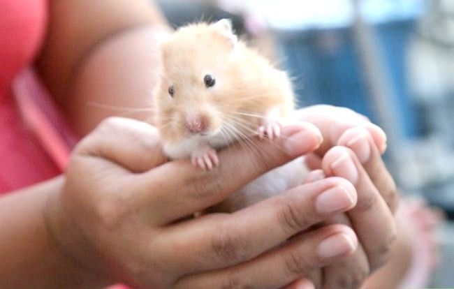 Titel afbeelding Create a Bond With Your Hamster Step 5