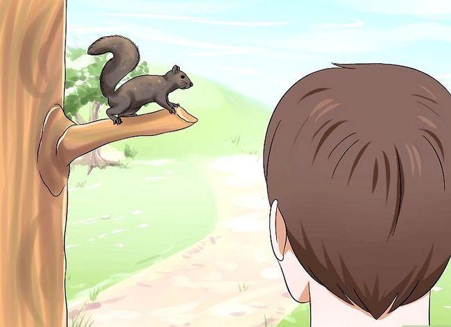 Hoe een baby eekhoorn te verhogen
