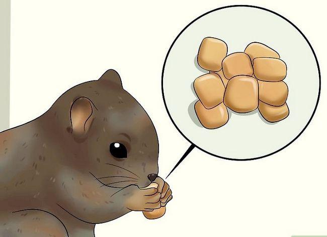 Titel afbeelding Raise a Baby Squirrel Step 19