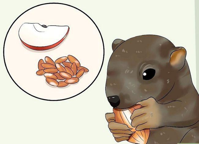Titel afbeelding Raise a Baby Squirrel Step 20