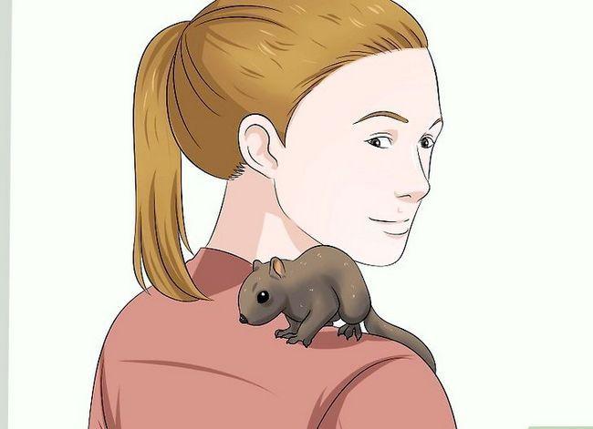 Titel afbeelding Raise a Baby Squirrel Step 22