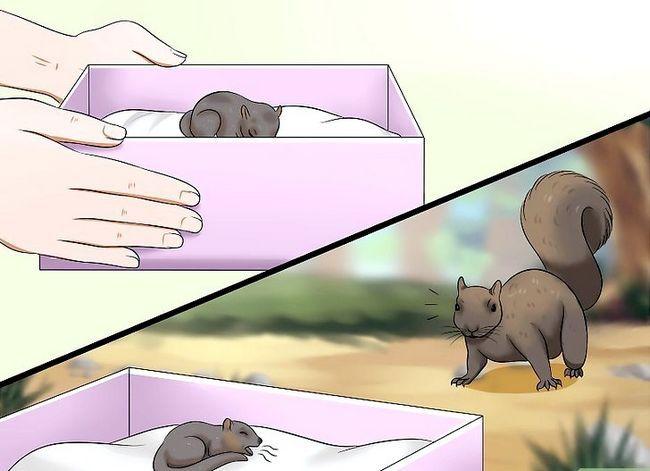 Titel afbeelding Raise a Baby Squirrel Step 5