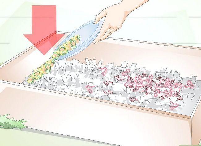 Titel afbeelding Raise Earthworms Step 15