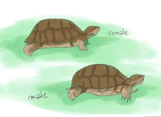 Hoe schildpadden op te voeden