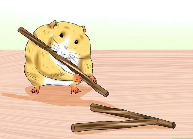 Titel afbeelding Care for a Hamster That Bites Step 2