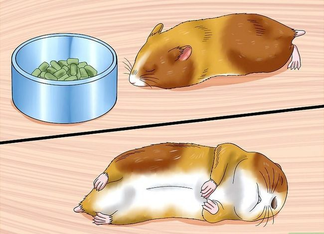 Titel afbeelding Care for a Hamster That Bites Step 4