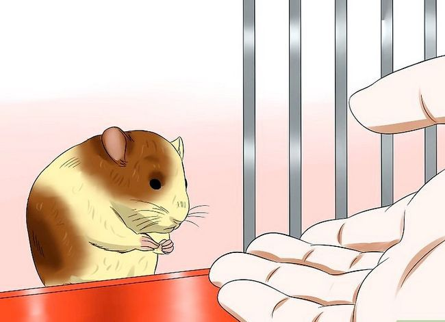 Titel afbeelding Care for a Hamster That Bites Step 5