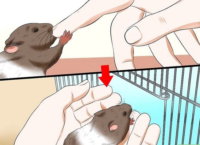 Titel afbeelding Care for a Hamster That Bites Step 9