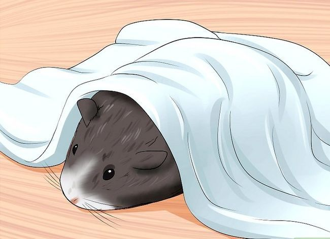 Titel afbeelding Care for a Dying Guinea Pig Step 6